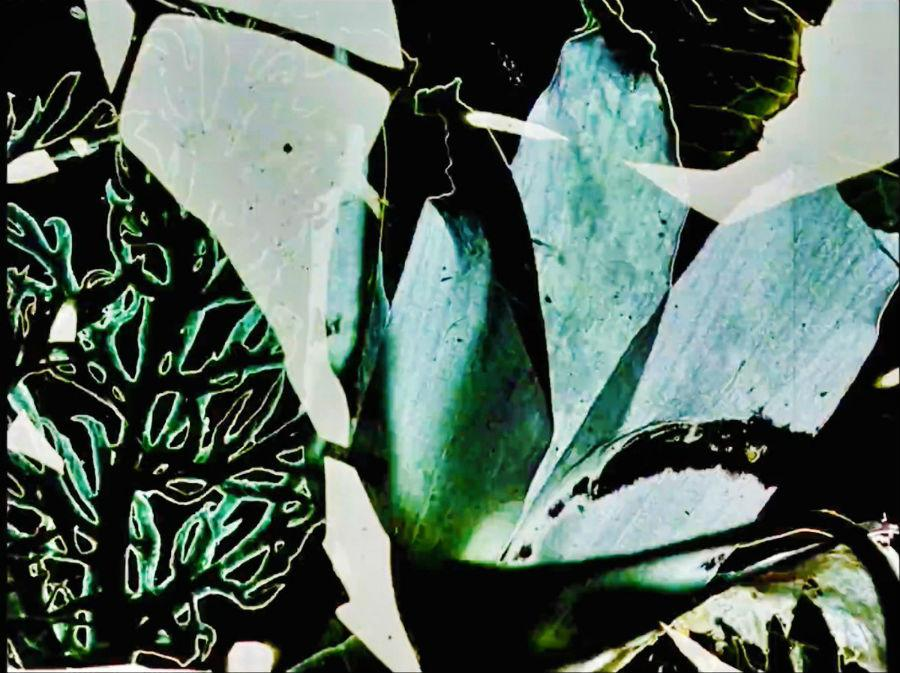 Film still from Stan Brakhage's Garden of Earthly Delights, 1981