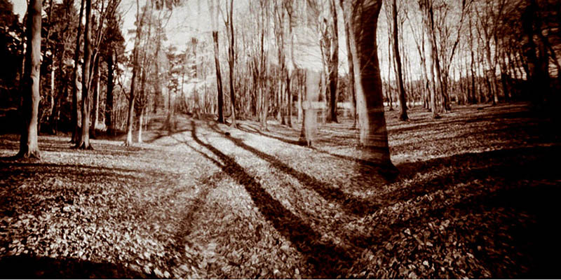 120mm Pinhole Blender photograph of the plantation used in the installation