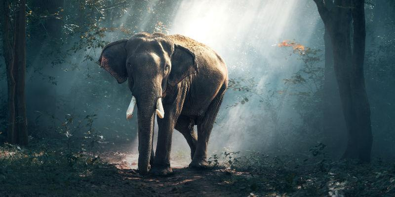 Image of an elephant in a wood