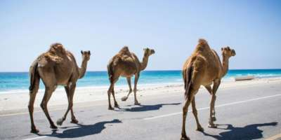 Langage and nature in southern arabia